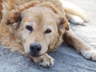 Signs of Common Urinary Problems in Dogs