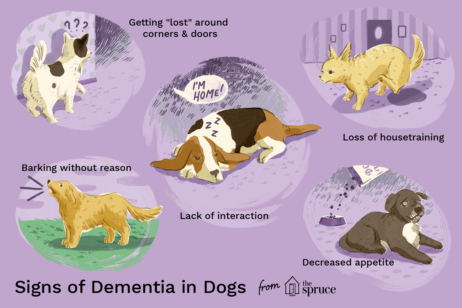 illustration of signs of dementia in dogs