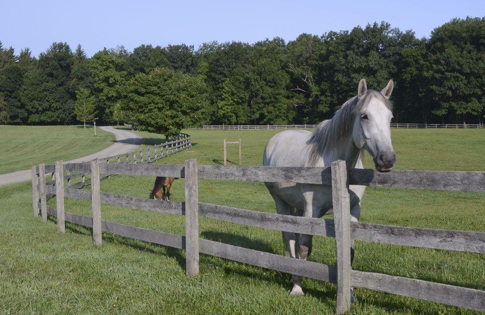 08-Old -Stone-Farm-White-Horse , Muchos sosteniendo la cabeza del caballo suavemente , Veterinario examinando los dientes de un caballo en el establo , Mujer joven con caballo en el campo