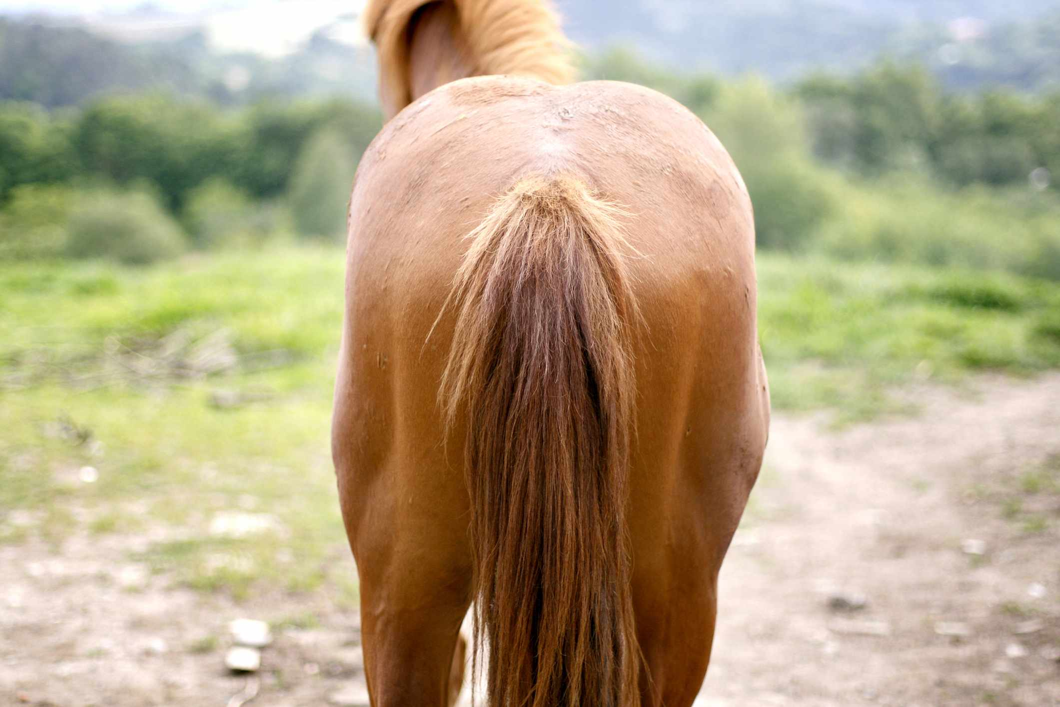 A horse's tail