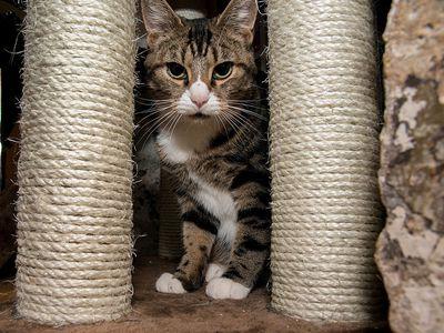 Feliway And Cat Behavior Modification