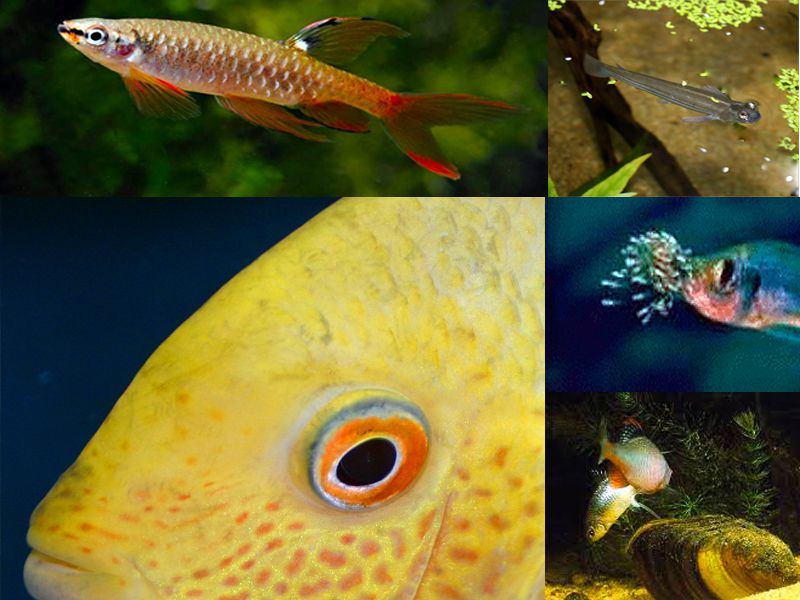 Strange Aquarium Fish with even Stranger Behaviour
