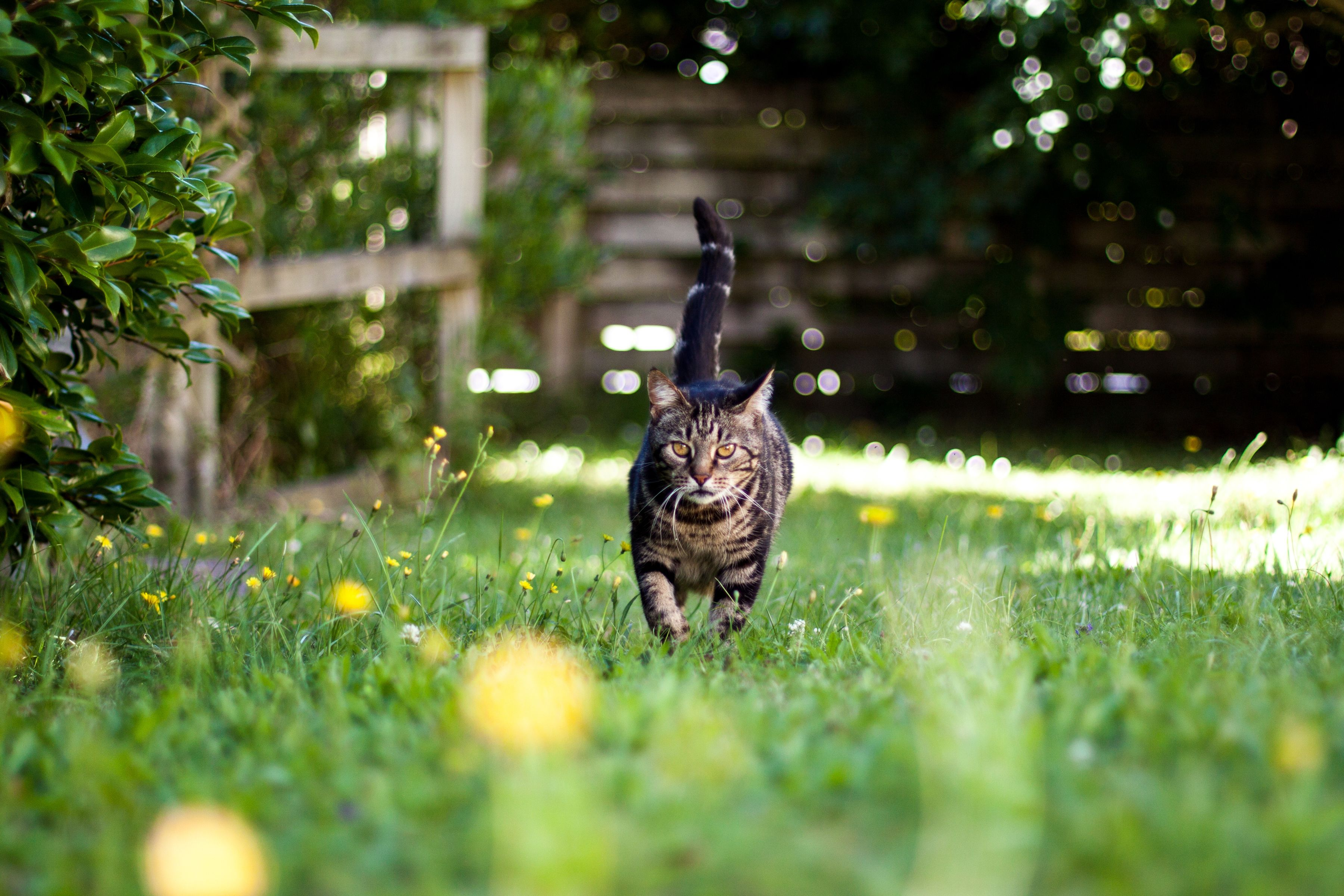 Keep Cats Off Patio Furniture.The 7 Best Cat Repellents Of 2019