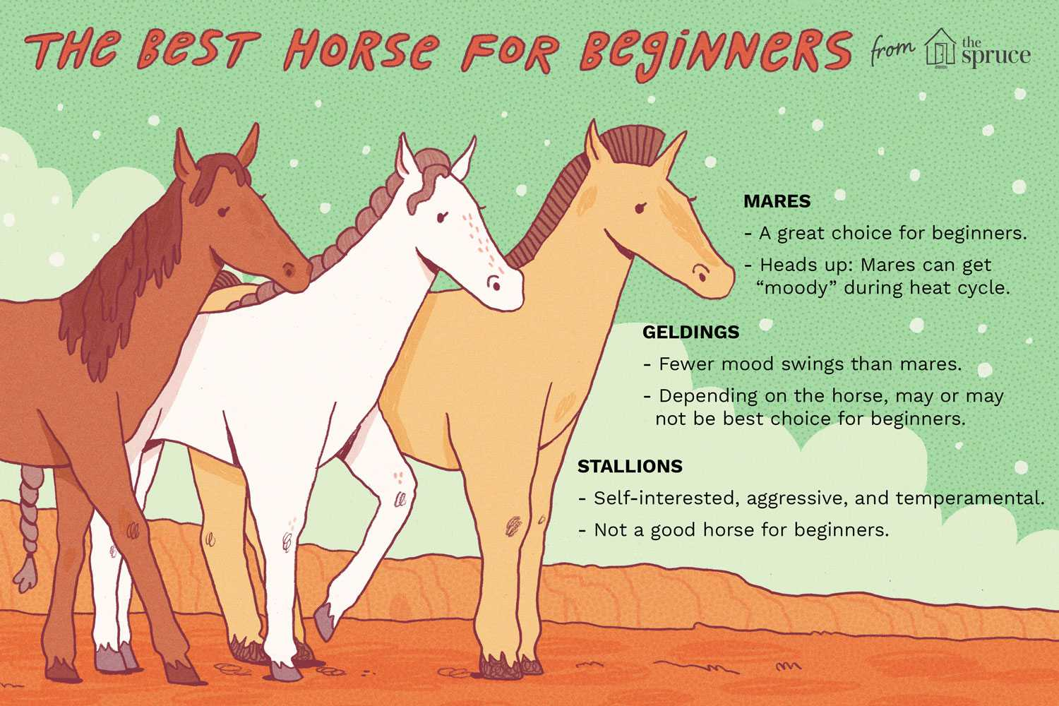 What's Best, a Mare, Gelding or Stallion?