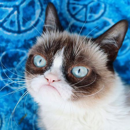 the 25 cutest cats you can follow online