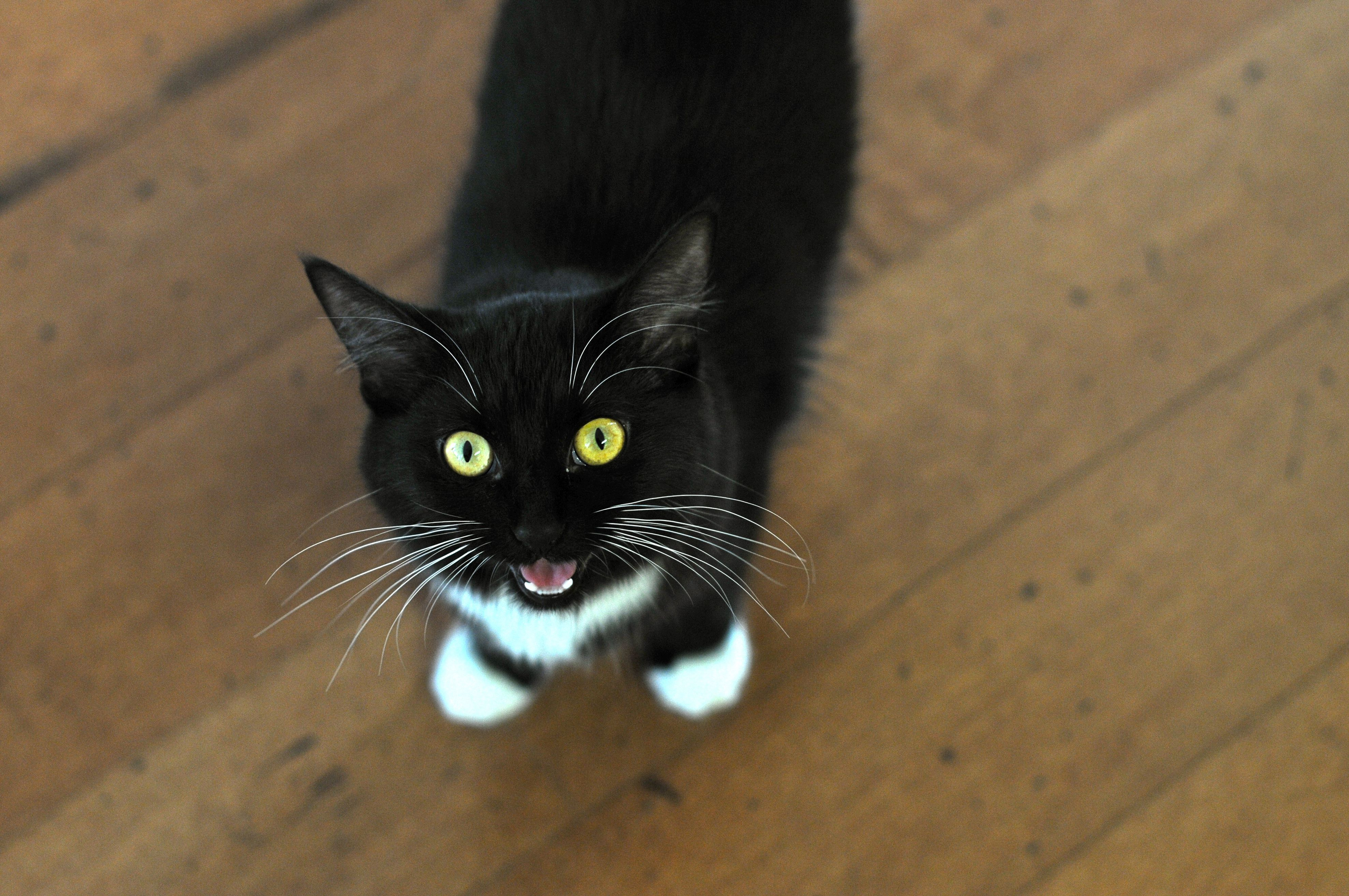 Reasons Why Your Cat Meows At Night