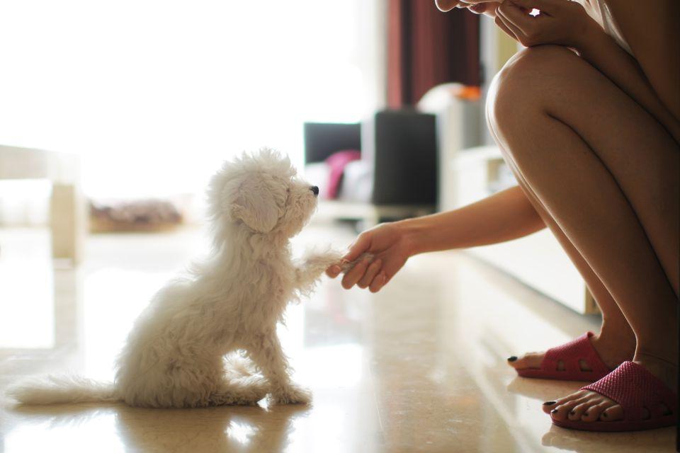 Pata de perro con dueño