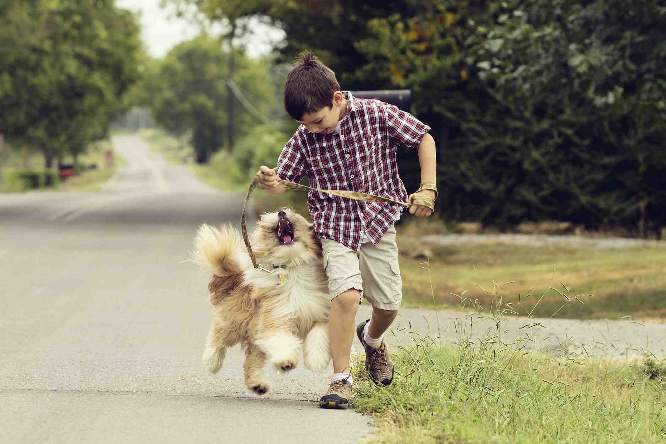 Child walking his dog