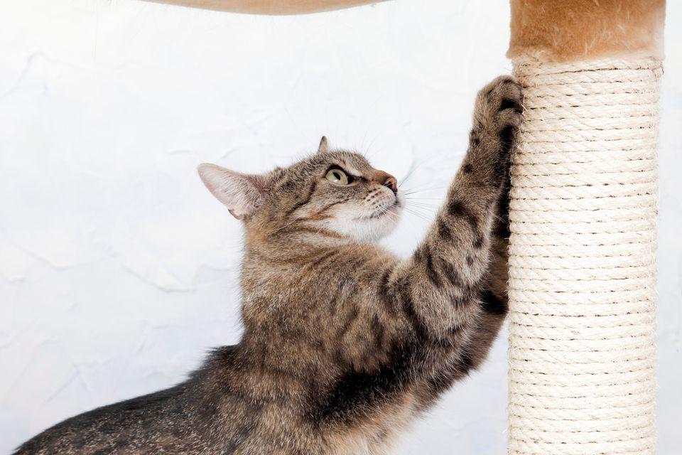 Un poste rascador o dos es esencial para las garras de los gatos