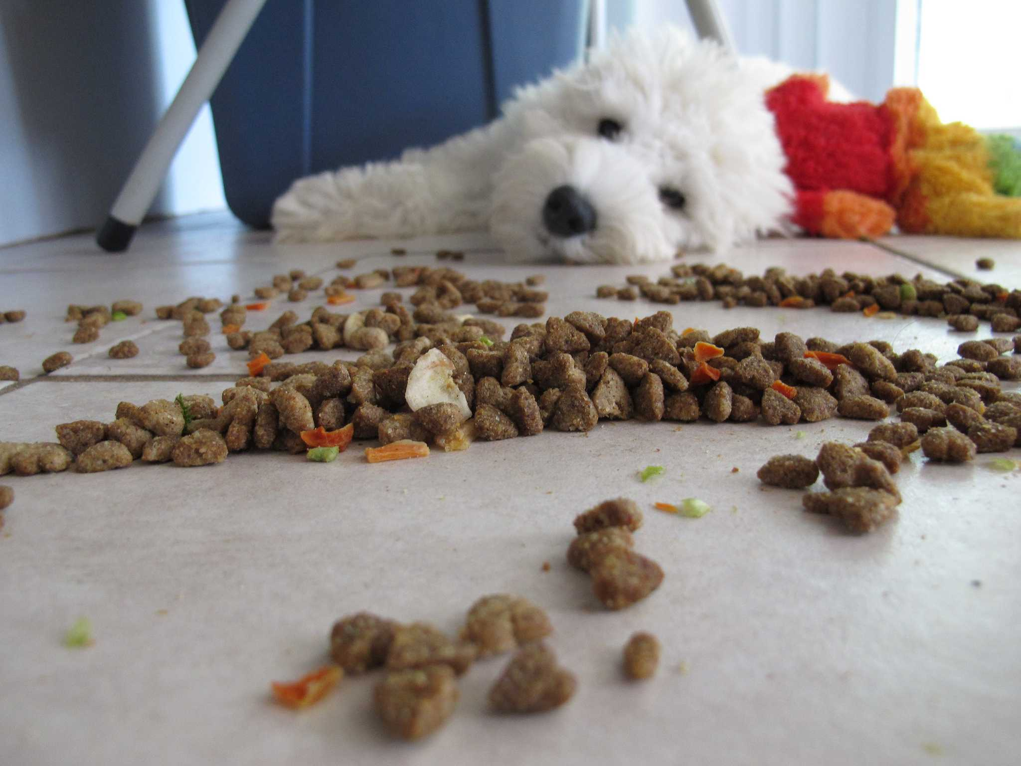 Dog laying down behind spilled food