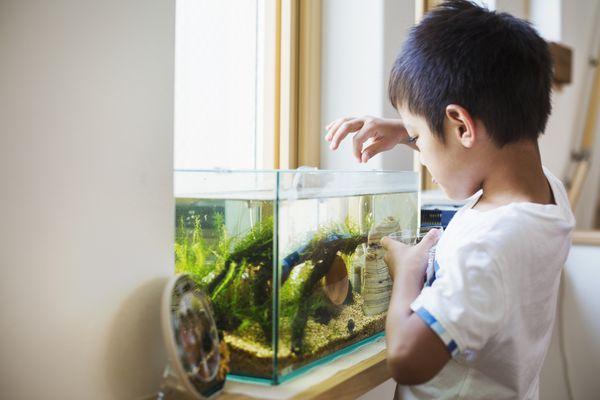 Young boy feeding tropical fish
