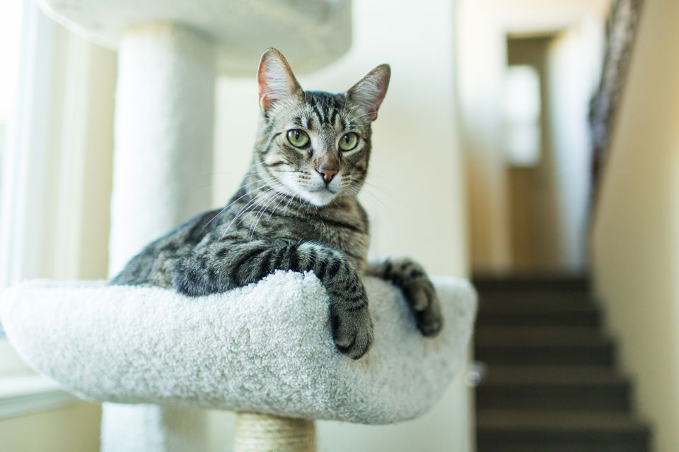 Tabby cat on a cat tree indoors near the stairs.