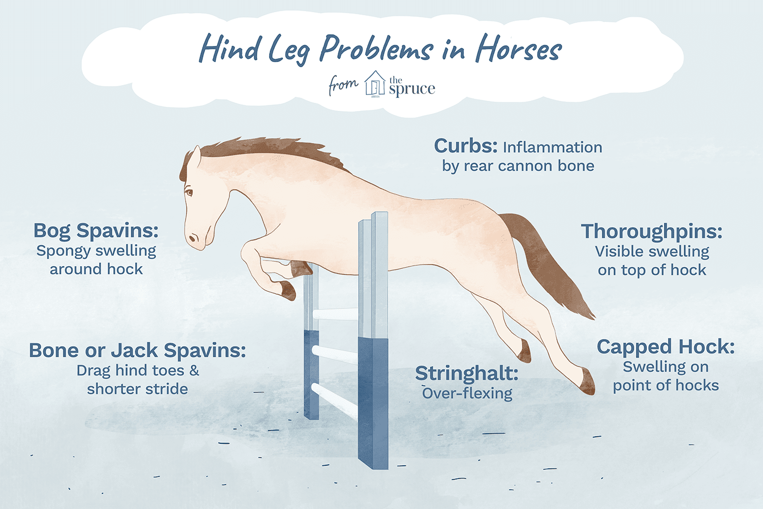 Hind Leg Problems in Horses - Causes and Treatment