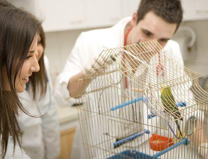 Vet examining bird