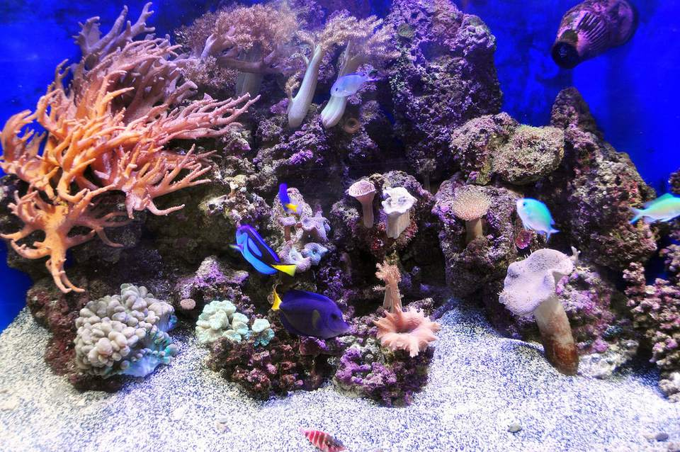 Saltwater tank with Live Rock
