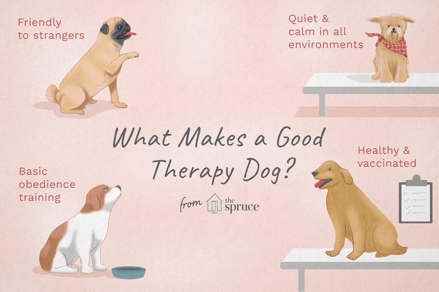 How To Train A Puppy To Be A Therapy Dog