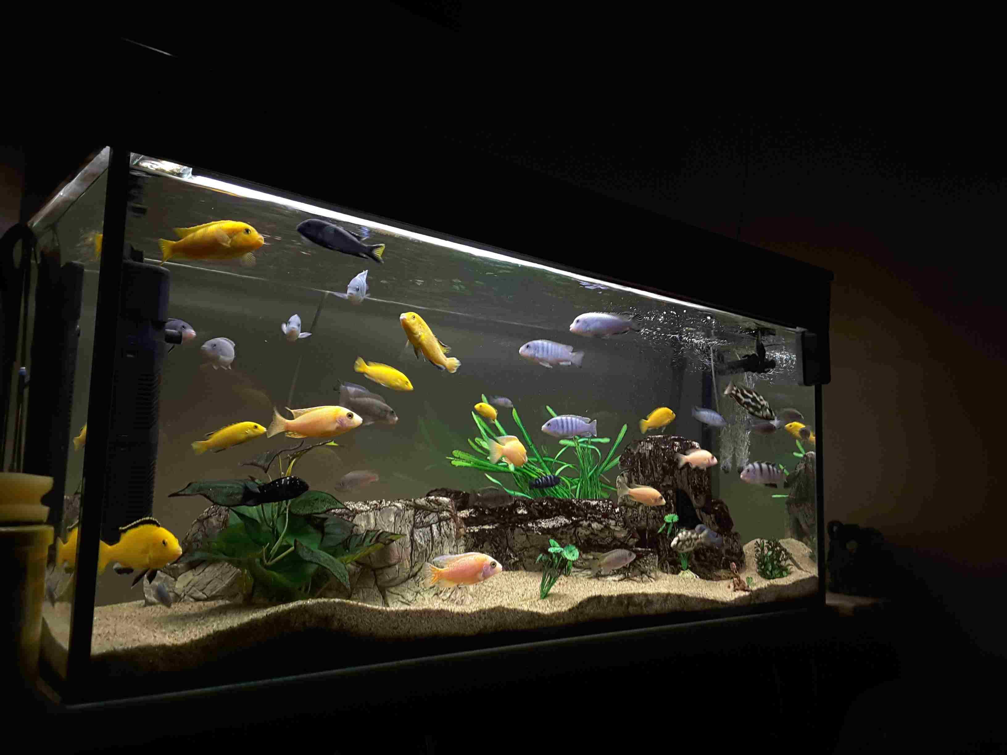 Fish swimming in aquarium at night