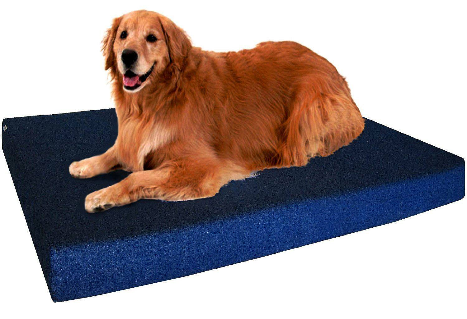 10 best kinds of dog beds for your pooch