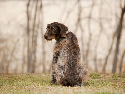 Options for Pet Burial and Cremation