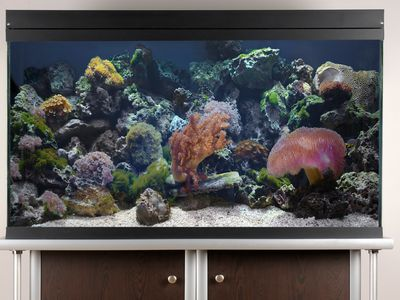 the 7 best led lighting sets to buy for reef tanks in 2019