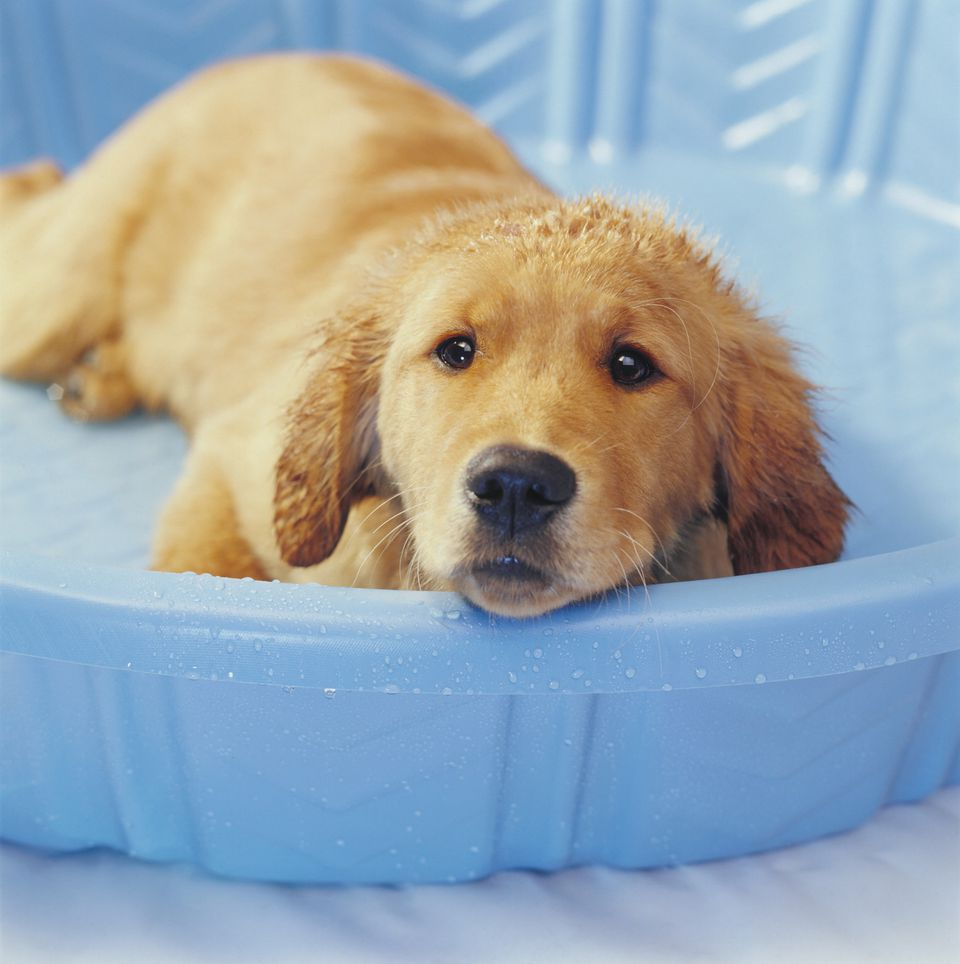 8 Ways To Keep Puppies Cool In Summer