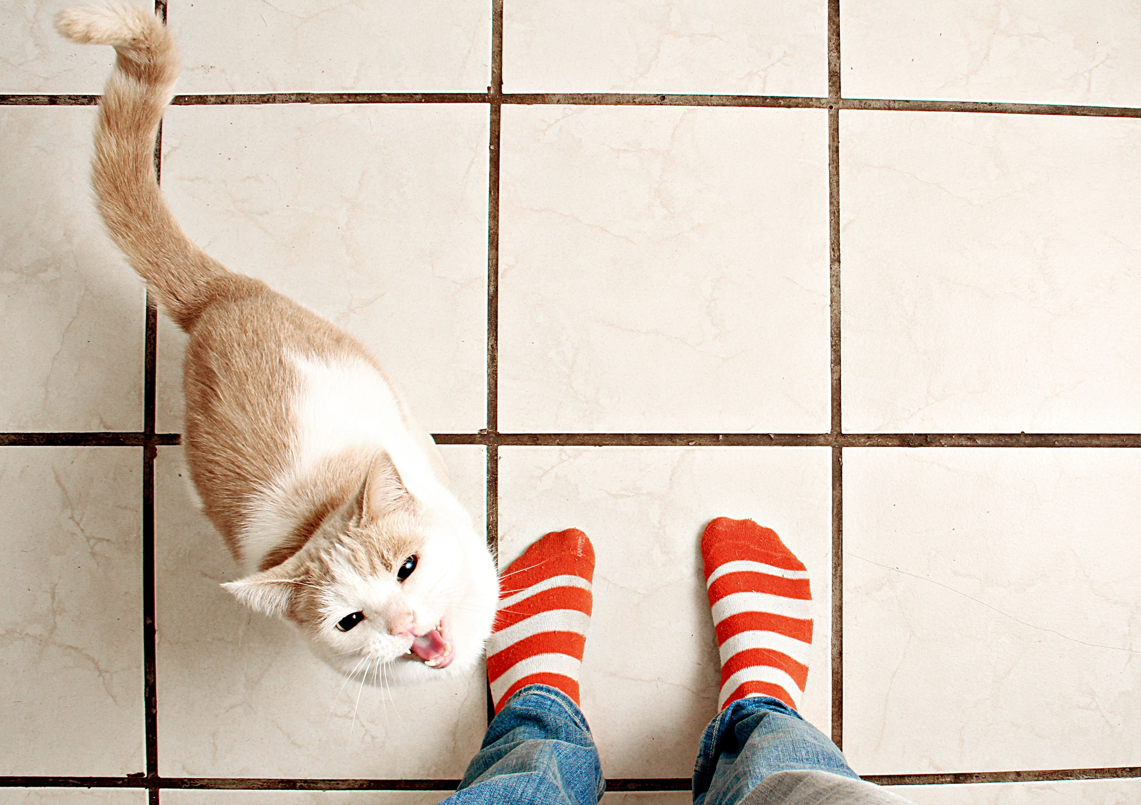 Top 12 Myths About Cats