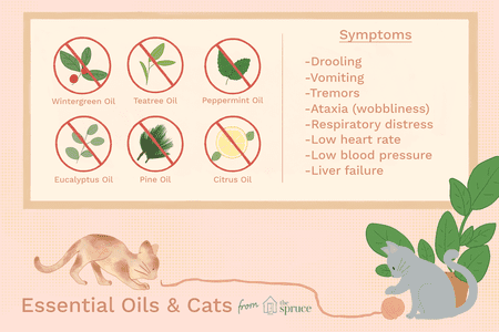 Essential Oil Toxicity To Cats