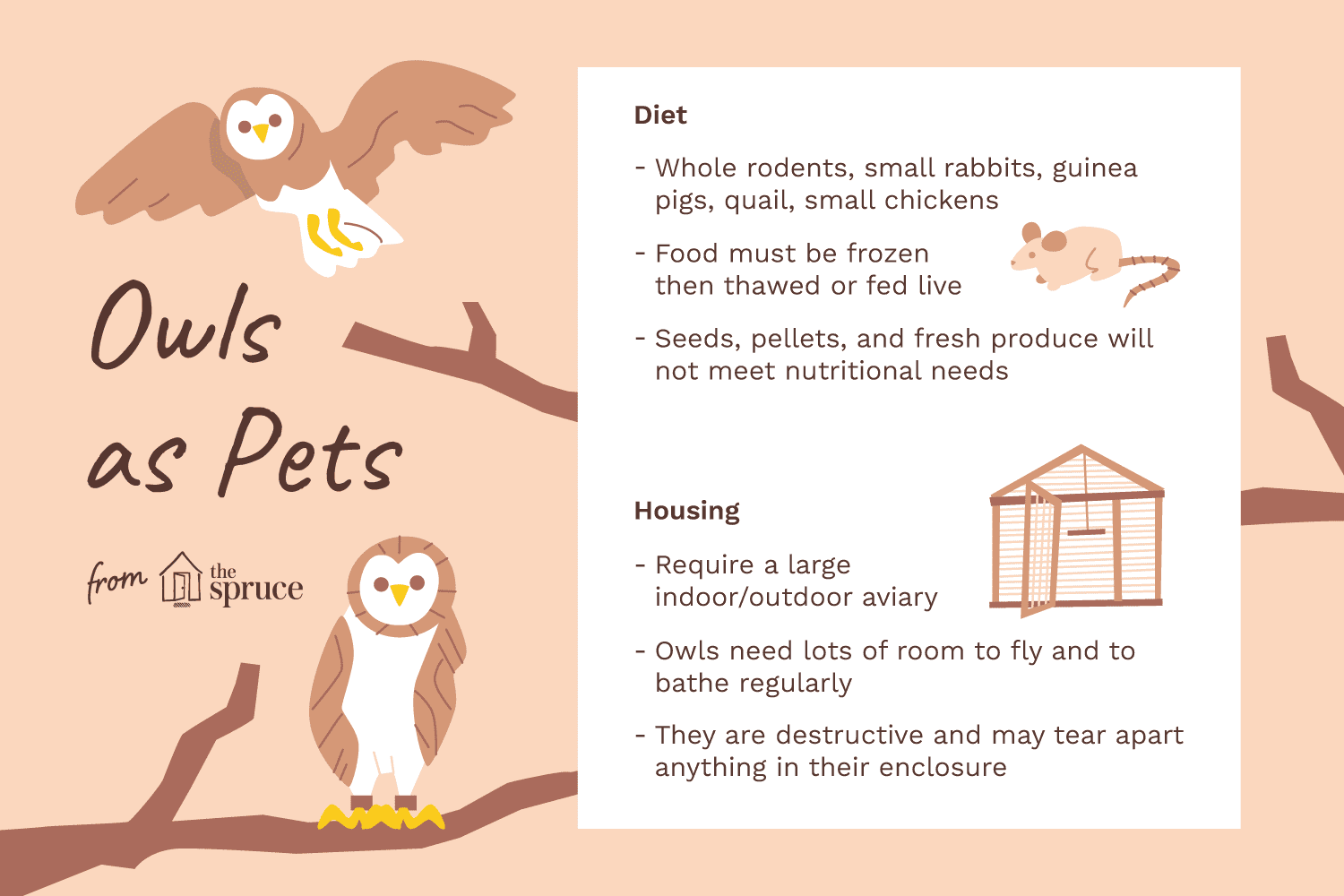 illustration of owls as pets—care sheet