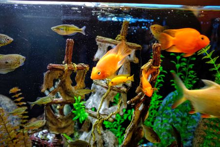 how to manage nitrates in your aquarium