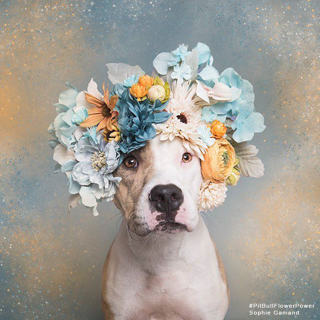 Dog with flowers on head