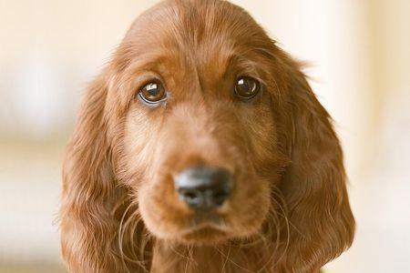 Puppy Body Language Understand Silent Puppy Talk