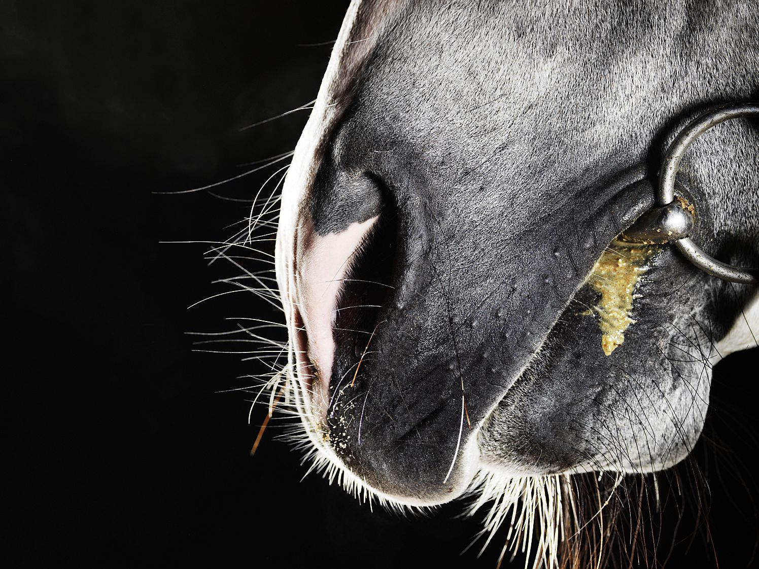 12 Ways Your Horse Tells You It Needs Its Teeth Checked