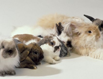 Rabbits of different colors lined up