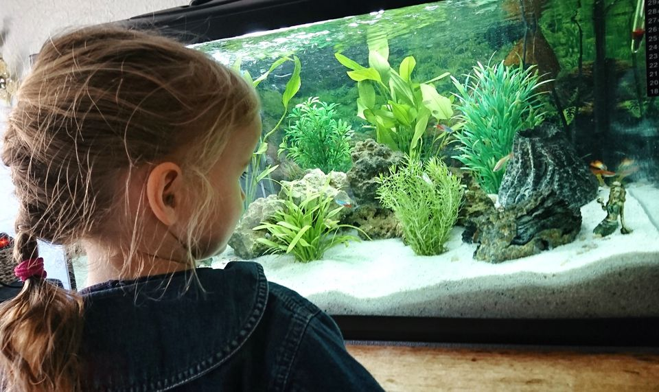 Child (4-5) looking at fish in a home aquarium