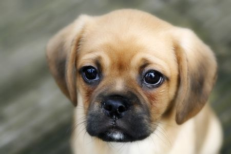 Beste 7 Common Puppy Diseases You Should Know YM-35