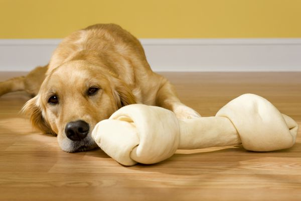 Is Rawhide Bad for Dogs?