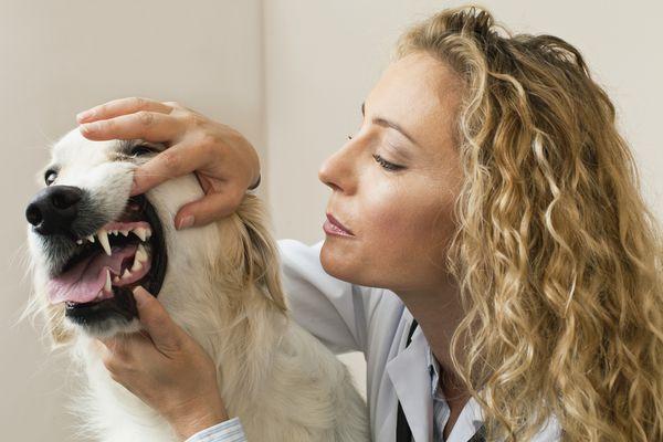 dog teeth problems