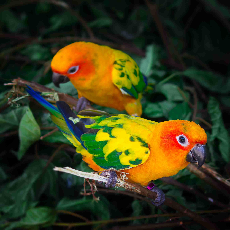 smart pet birds by thevetscare.com