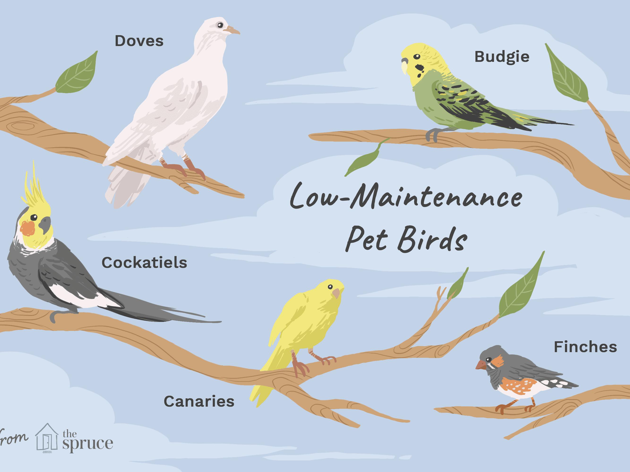 8 Top Low Maintenance Pet Bird Species