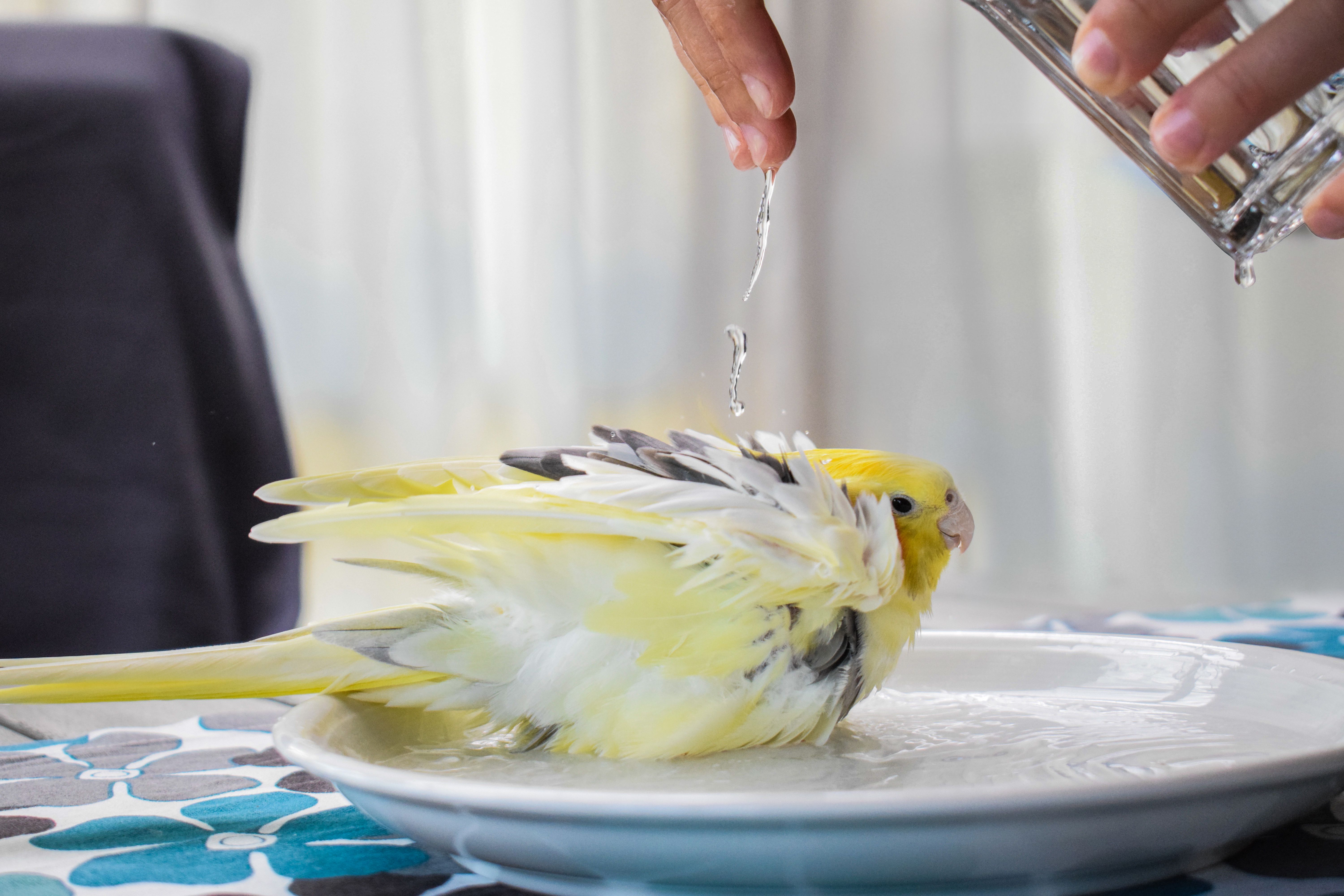 Cropped Hand Of Person Pouring Water On Bird