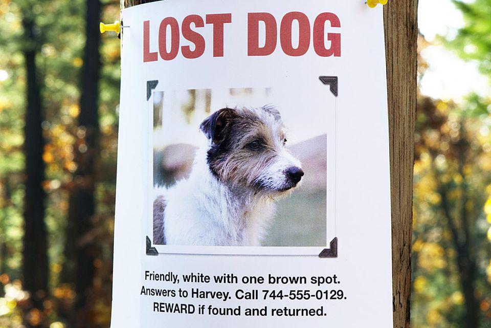 Cartel de perro perdido