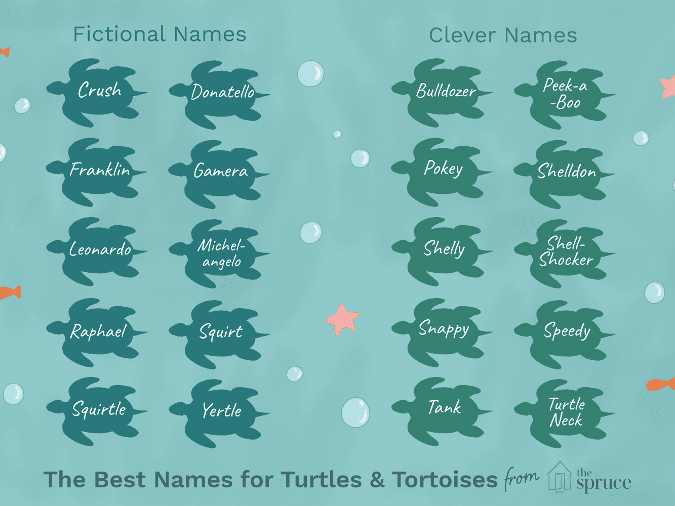 100 Names For Pet Turtles And Tortoises