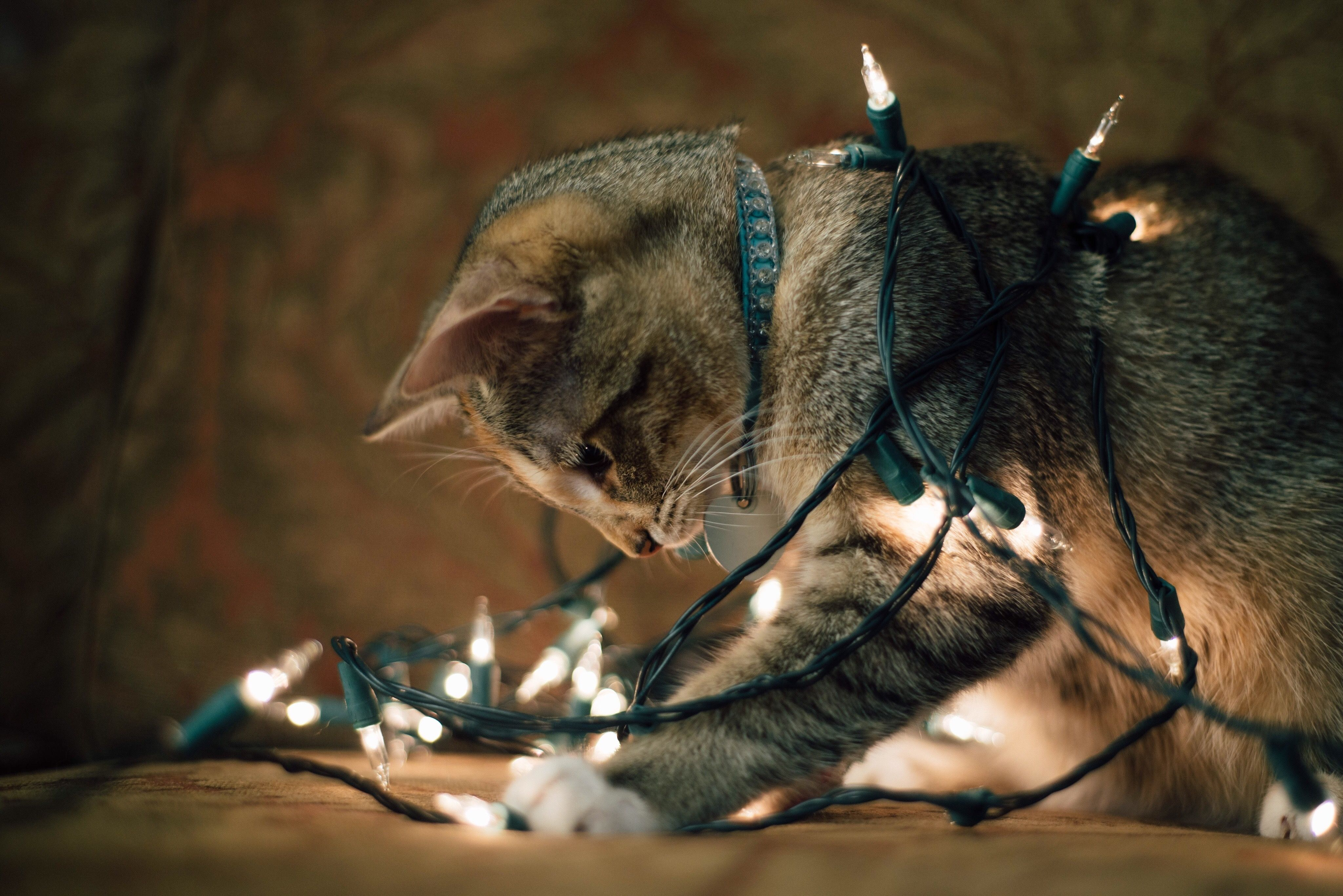 Cat playing with string lights