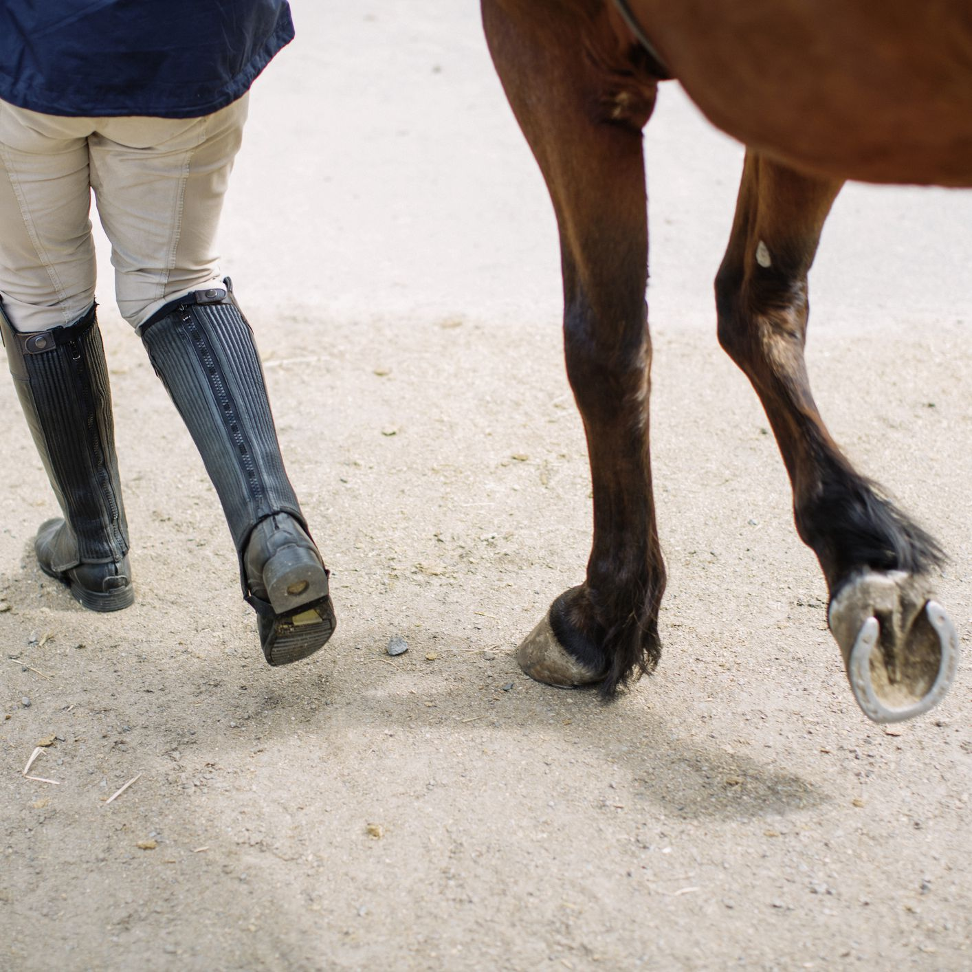 Should Your Horse Wear Shoes Or Go Barefoot