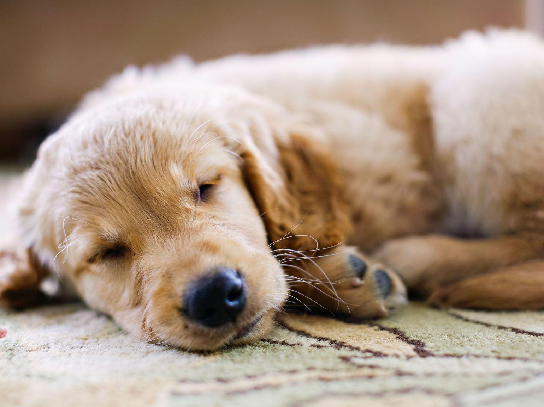 Why Does My Dog Sleep So Much?