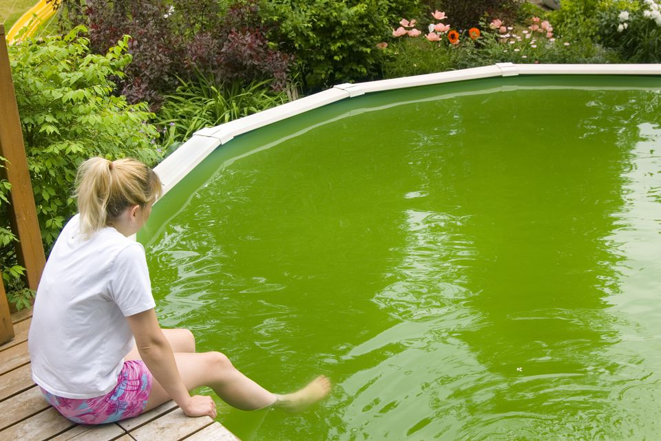woman looking in algae-filled pool