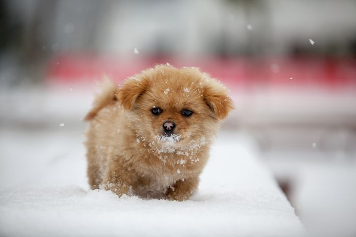 puppy standing in the snow
