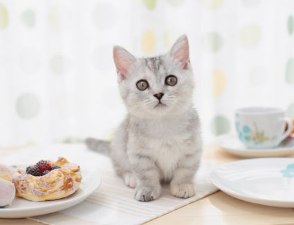 Kitten on the table at a cat cafe
