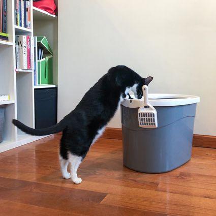IRIS Top Entry Cat Litter Box