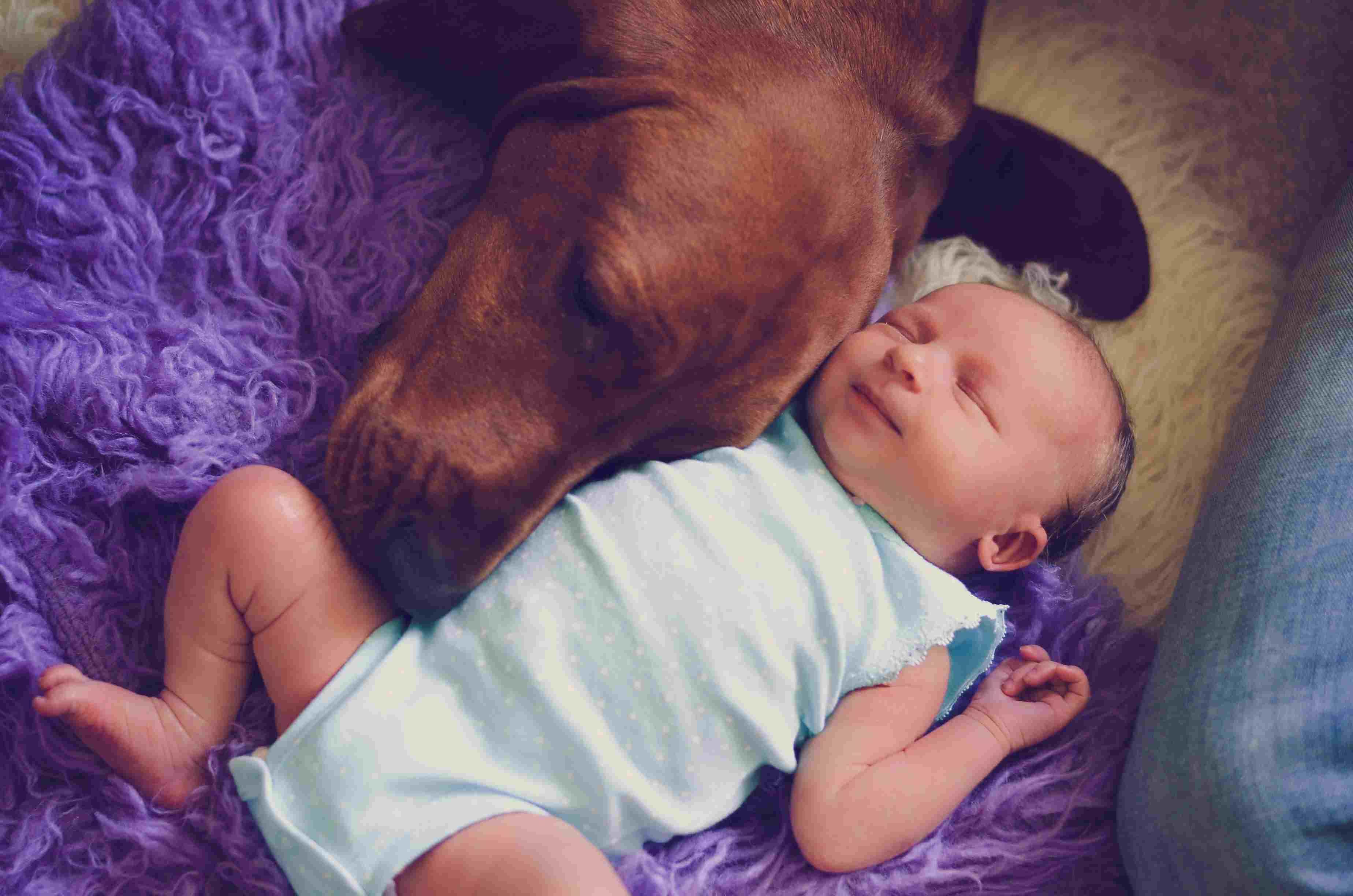 Redbone Coonhound dog sleeping with baby